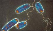 レジオネラ属菌